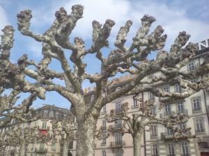 Clean-shaved trees at Lake Geneva