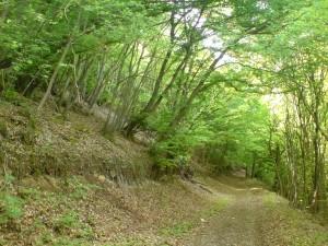 Walk in Annemasse with tilting trees